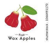 the red fruit water rose apple  ...   Shutterstock .eps vector #1066491170