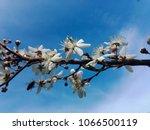 beauteful spring flowers   Shutterstock . vector #1066500119