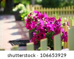Petunia flowers on a decorative fence in a front yard