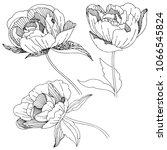 wildflower peony flower in a... | Shutterstock .eps vector #1066545824