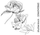 wildflower peony flower in a... | Shutterstock .eps vector #1066545860