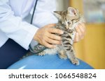 close up veterinarian woman... | Shutterstock . vector #1066548824