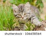 Stock photo kitten 106658564