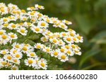 floral background with white... | Shutterstock . vector #1066600280