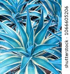 agave plant leaves | Shutterstock . vector #1066605206