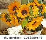 vase with bright yellow and... | Shutterstock . vector #1066609643