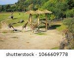 prague  czech republic  ...   Shutterstock . vector #1066609778