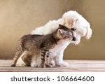 Stock photo friends small dog and cat together 106664600