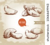brazilian nuts sketch set.... | Shutterstock .eps vector #1066669943