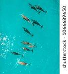 school of dolphins  zanzibar | Shutterstock . vector #1066689650