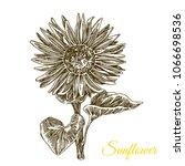 Sunflower. Sketch. Engraving...