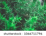 spider green bush | Shutterstock . vector #1066711796