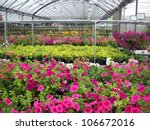 A Greenhouse Full Of Flowers.