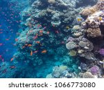 observation of jellyfish during ... | Shutterstock . vector #1066773080