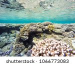 observation of jellyfish during ... | Shutterstock . vector #1066773083