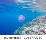 observation of jellyfish during ... | Shutterstock . vector #1066773110