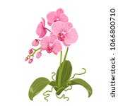 pink purple orchid phalaenopsis ... | Shutterstock .eps vector #1066800710