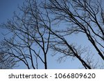 branches of trees against the... | Shutterstock . vector #1066809620