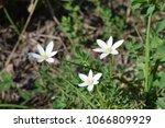 flower birdhouse. indian onion. | Shutterstock . vector #1066809929