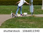 young lady walking outdoor on... | Shutterstock . vector #1066811540