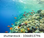 lots of fish and corals during...   Shutterstock . vector #1066813796