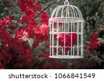 heart inside the bird cage at... | Shutterstock . vector #1066841549