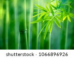 Asian Bamboo Forest Natural...