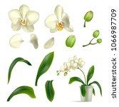 orchid petal stalk pot... | Shutterstock .eps vector #1066987709