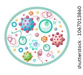 set of various microbes ... | Shutterstock .eps vector #1067013860