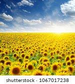 field of sunflowers and sun  | Shutterstock . vector #1067017238