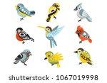 small bird species  sparrows...   Shutterstock .eps vector #1067019998