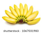 bunch of baby bananas isolated... | Shutterstock . vector #1067031983