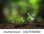 growing coffee beans watering... | Shutterstock . vector #1067058083