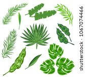 different tropical leaves set.... | Shutterstock .eps vector #1067074466