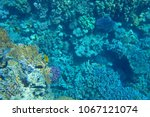 colorful coral reef | Shutterstock . vector #1067121074