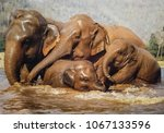 Small photo of Thai elephants enjoin take shower and playing in the jungle