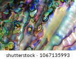 natural pearl texture form big... | Shutterstock . vector #1067135993