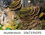 Green And Brown Mushroom On The ...