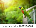 close up of a colorful rainbow...   Shutterstock . vector #1067186384