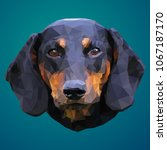 dachshund low poly design.... | Shutterstock .eps vector #1067187170