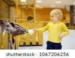 little boy feeding pigs. child... | Shutterstock . vector #1067206256