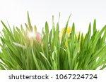 fresh spring grass stock images.... | Shutterstock . vector #1067224724
