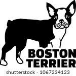boston terrier silhouette real... | Shutterstock .eps vector #1067234123