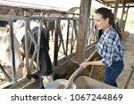 stock breeder feeding cows in... | Shutterstock . vector #1067244869
