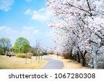 cherry blossoms tree night... | Shutterstock . vector #1067280308