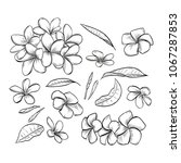vector hand drawn elegant... | Shutterstock .eps vector #1067287853