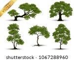 beautiful tree realistic  on a... | Shutterstock .eps vector #1067288960