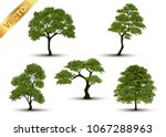 beautiful tree realistic  on a... | Shutterstock .eps vector #1067288963