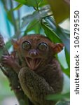 Small photo of bohol tarsier