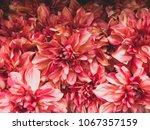 flowers. texture of flowers....   Shutterstock . vector #1067357159